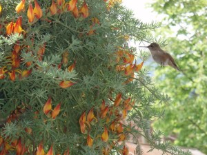 The hummingbird greeter