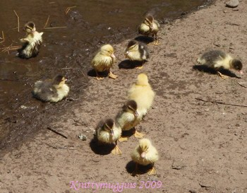 Awww.... what's more precious than baby duckies?